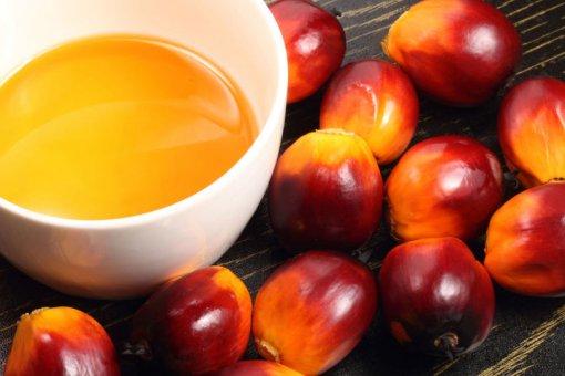 Малайзийская индустрия пальмового масла осваивает блокчейн