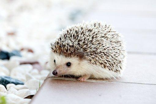 Hedgehog Markets использует доходность DeFi для финансирования ставок без потерь