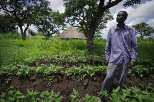 Блокчейн гарантирует африканским фермерам защиту от недобросовестных поср