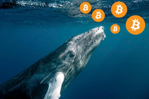 Один из самых богатых биткоин-китов в мире только что переместил 95 млн долларов в BTC