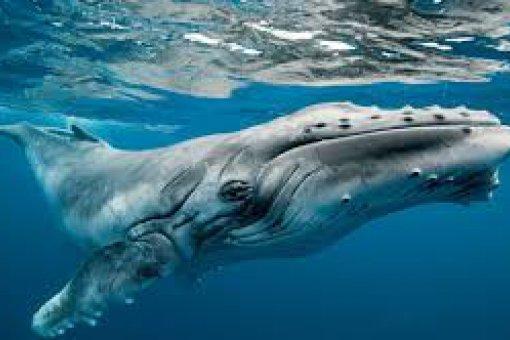 Анонимный кит переводит почти триллион долларов в биткоинах: как это произошло