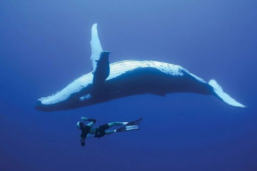Ethereum становится блокчейном китов – этого стоит опасаться?