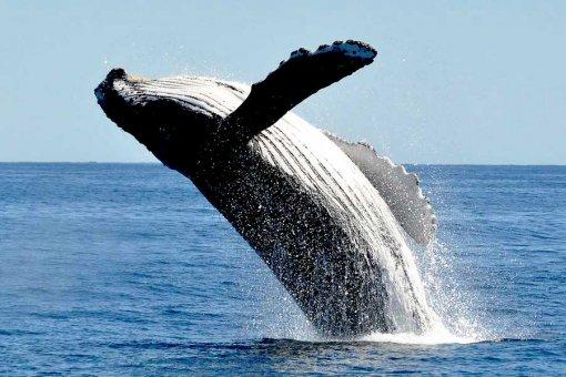 Аналитик: «Один из китов недавно купил ETH на 3 миллиарда долларов»