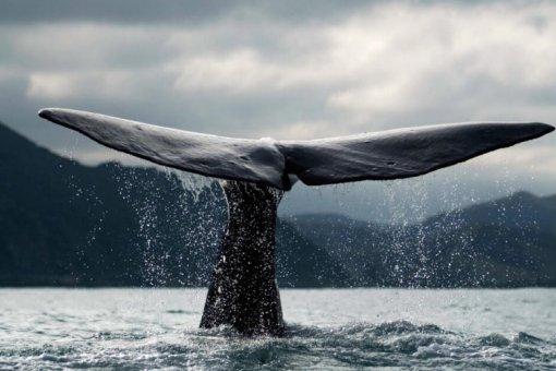 Зачем киты накапливают биткоины после краха понедельника?